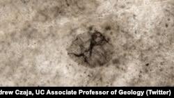 عکس فسیل ۲.۵ میلیارد ساله از اندرو چایا، دانشیار دانشگاه سینسیناتی
