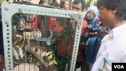 Empat ekor kukang dan dua ekor lutung Jawa diamankan di BKSDA Jawa Timur (4/8). (VOA/Petrus Riski)