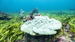 Quiz - Scientists Study How Ocean Seagrasses Can Fight Climate Change