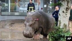 Muchos animales, algunos peligrosos huyeron del zoológico de Tiflis, durante las inundaciones en Georgia.