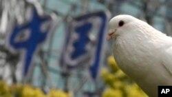 """2013年4月1日在上海一个公园 一只鸽子在一个写着""""中国""""标记附近的树上栖息着。"""