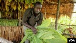Ahamed Mugisa in his drying shed outside Kikoboza, Western Uganda, July 3, 2014. (H. Heuler/VOA News)