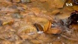 VOA英语视频:被污染的河流或可提供科技业所需的稀土