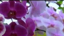 Vashington botanika bog'ida/US Botanical Garden