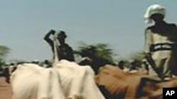 Togo : le SOS des éleveurs du Sahel