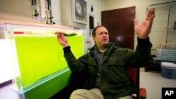 Laboratorium energi Universitas Utah State berusaha mengubah ganggang menjadi biofuels untuk bahan bakar pesawat jet (foto: ilustrasi).