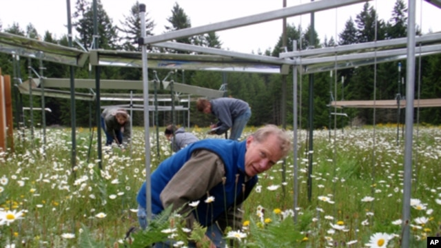 University of Oregon professor Bart Johnson counts plants at a research plot near Rainier, Washington.