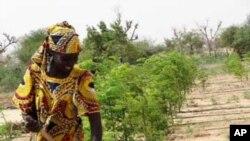 Namibe: Banco Sol disponibiliza 50 milhões de dólares a pequenos agricultores