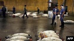 Tuna - ugrožena vrsta ribe