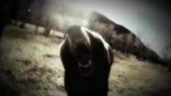Осторожно: медведи!