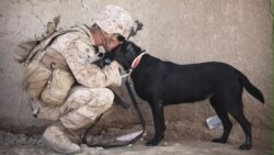 US War Dogs Offer Protection, Support