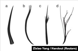 The four feather types: filaments, filament bunches, tufted filament, and down feather, based on Jurassic Period fossils unearthed in China, are seen in this illustration handout, released from University of Bristol in Bristol, United Kingdom, Dec. 14, 2018.