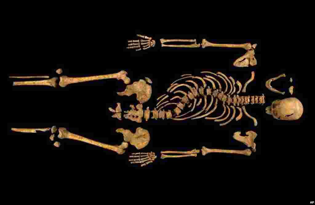 Một bức ảnh được cung cấp bởi trường Đại học Leicester cho thấy bộ hài cốt của vua Richard III của Anh được tìm thấy bên dưới một bãi đậu xe hồi cuối tháng 9tại Leicester.