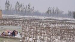 اتحاديه اروپا ۲ ميليون دلار به قربانيان خشکسالی در افغانستان کمک می کند