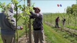 Granjeros temen perder mano de obra migrante