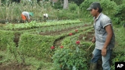 Susanto, a 17-year-old former street kid weeds the fields of The Learning Farm in the hills of Puncak, Indonesia