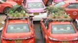 Փոքր այգիներ են տնկվել կորոնավիրուսի պատճառով չօգտագործվող տաքսիների տանիքներին, որոնք կայանված են Բանգկոկում