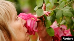 A visitor smells a Sir Paul Smith climbing rose at the Chelsea Flower Show in London, May 21, 2013.