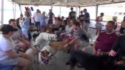 Pesiar Bersama Anjing Peliharaan