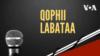 Qophii Labataa, Jimaata Hagayya 20