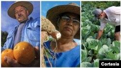 Agricultores que estão a participar da plataforma digital criada pela Field Right em Santa Catarina