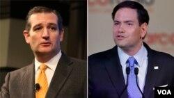 得克萨斯州联邦参议员、总统大选参选人克鲁兹(左)和佛罗里达州的联邦参议员、总统大选参选人鲁比奥。