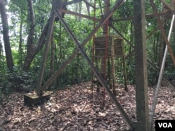 Scientists were using this tower in Uganda's Zika Forest to study yellow fever when they isolated the Zika virus in rhesus monkey blood in 1947. (J. Craig/VOA)