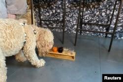 Seekor anjing menikmati minuman di After Bark, bar yang juga membuat koktail untuk anjing, di London, Inggris, 22 Juli 2021. (REUTERS/Tara Oakes)