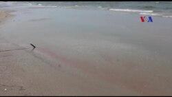 Biển Thừa Thiên Huế nhiễm độc đỏ