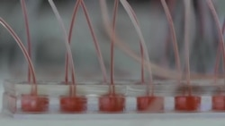 دانشمندان در تلاش تولید اعضای بدن انسان با چاپگر سه بعدی