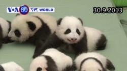 Trung Quốc giới thiệu 14 chú gấu trúc mới sinh (VOA60)