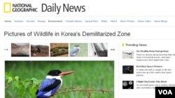 세계적인 인문지리 잡지인 미국의 '내셔널 지오그래픽'이 한반도 비무장지대의 야생생물을 소개하는 특집기사를 실었다.