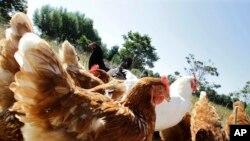 McDonald's anunció en marzo que dejará de ofrecer carne de gallinas criadas con antibióticos de uso humano.
