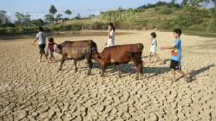 FILE - Children herding cattle walk through a dried pond in the summer heat as they search for drinking water in Shaoyang county, Hunan province, Aug. 1, 2013.