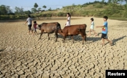 Children herding cattle walk through a dried pond in the summer heat as they search for drinking water in Shaoyang county, Hunan province.