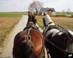 马车走在阿米什家庭农场小道上