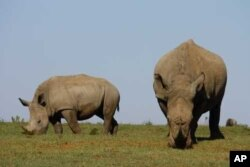 Mander wants to see African rhinos where they belong: out in the wild, free from human threat