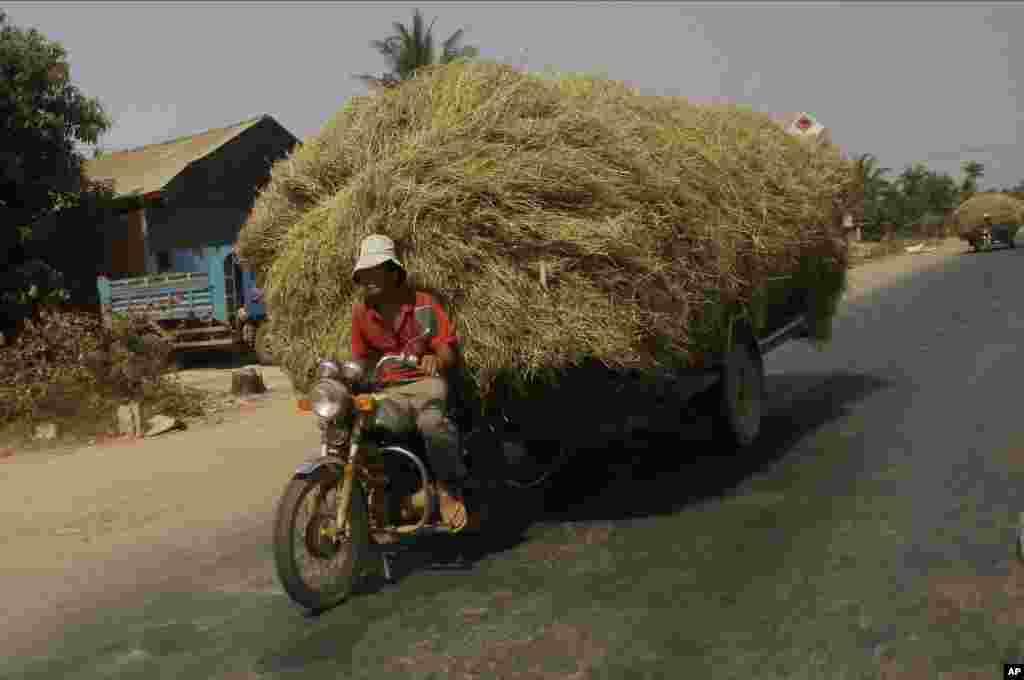 مردی در حال حمل علوفه برای مصرف گاوهایش در فصل خشکی در حومه پنوم پن، کامبوج