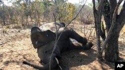 FILE - A dead elephant is seen in Hwange National park, Zimbabwe, Aug. 29, 2020.