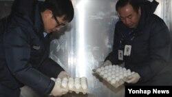 미국산 달걀 표본 150kg(2천160개)이 12일 인천국제공항에 도착, 농림축산검역본부 직원들의 검역 절차를 거치고 있다.