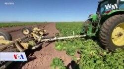 SAD: Pandemija nanijela veliku štetu farmerima