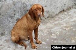 تصویری که ادعا می شود مربوط به سگ آزاردیده است