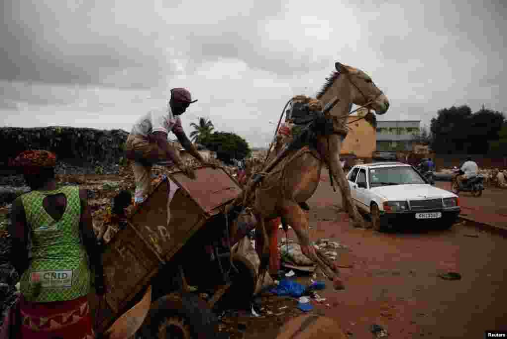 아프리카 말리의 바마코 쓰레기 하차장에서 한 남성이 당나귀 수레에 싣고 온 쓰레기를 내리고 있다.