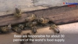 Bees are Carrying Pesticides into the World's Honey