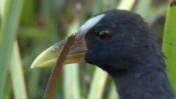 Khu đầm lầy tại Florida - 1 địa điểm du ngoạn