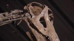Big Dinosaur Brings Big Money in Britain