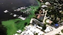 Contaminación en Florida por crecimiento de algas
