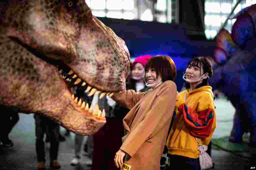 Members of the media touch a moving model of a Tyrannosaurus, during a media preview of the Dinoa Live Exhibition / Amazing Dinosaur Art Exhibition in the Shinjuku district of Tokyo.