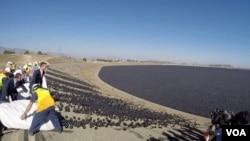 洛杉矶市长释放黑球减少水库蒸发(美国之音国符拍摄)