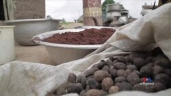 Taking Shea from Cottage Industry to Big Business in Ivory Coast